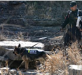 北京保安服务公司